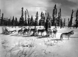 Siberian Husky Ursprung und Geschichte