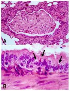 Staupe Virus Husky Impfung