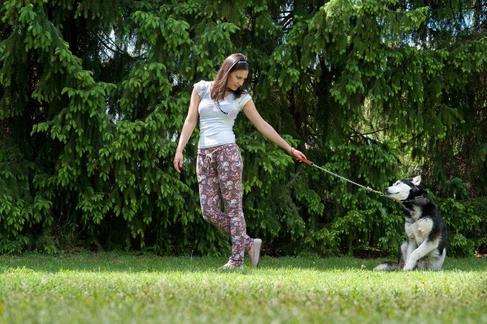 täglicher Auslauf mit dem Husky