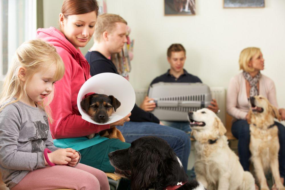 Wann muss ich mit dem Husky zum Tierarzt?