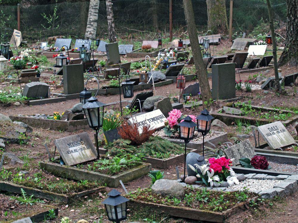Husky auf dem Tierfriedhof begraben