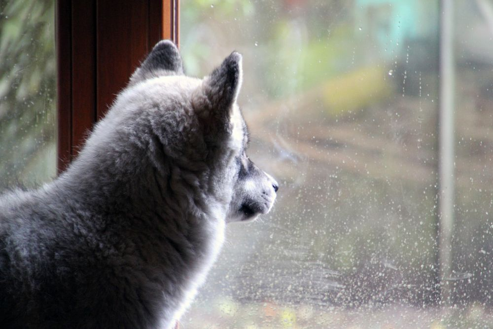 Mein Husky wird alt. - Wie kann ich meinen Hund in den letzten Lebensjahren optimal versorgen?