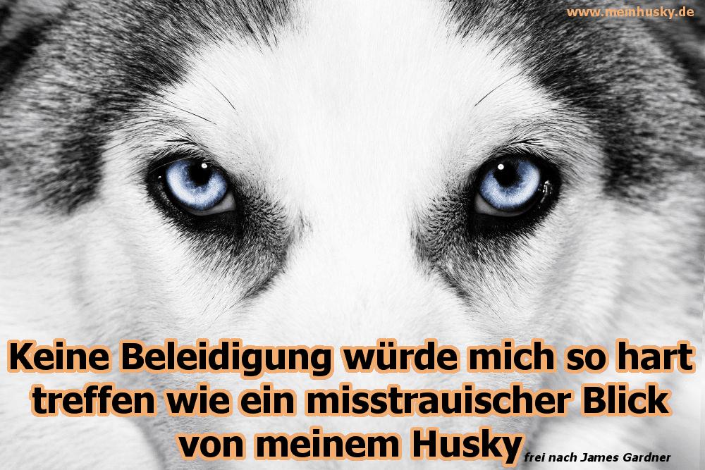 Huskys schöne Augen
