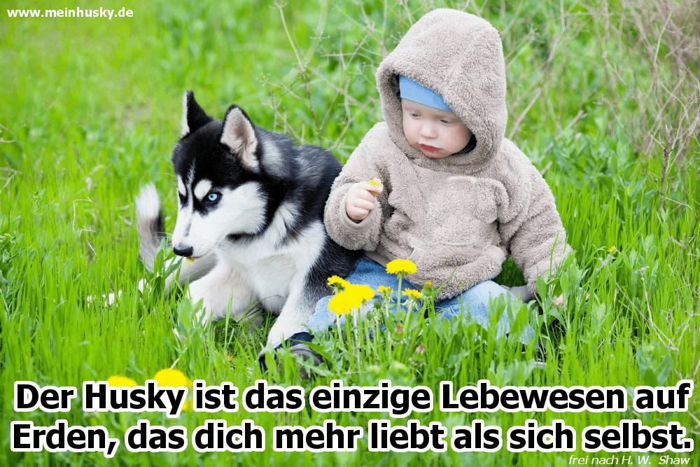 Ein Baby spielt mit seinem Husky im Garten