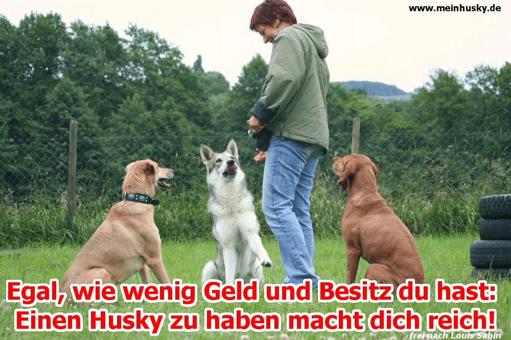 Ein Mann spielt mit seinen Hunden