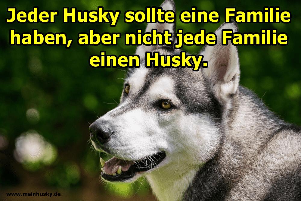 Ein Husky lächelt
