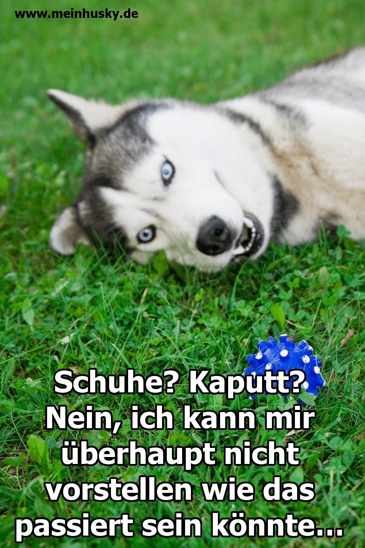 Ein Husky liegt im Gras mit seinem Ball