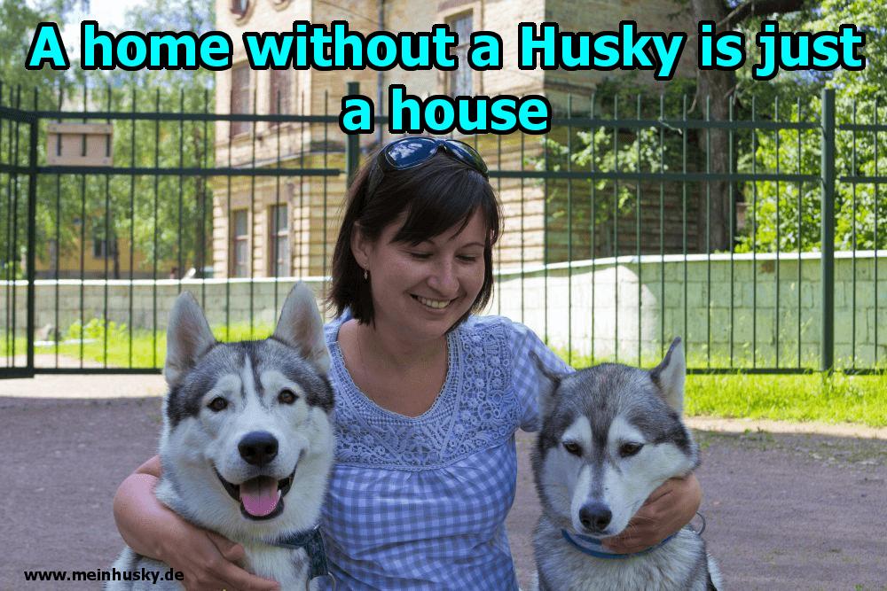 Eine Frau umarmt sie zwei Husky