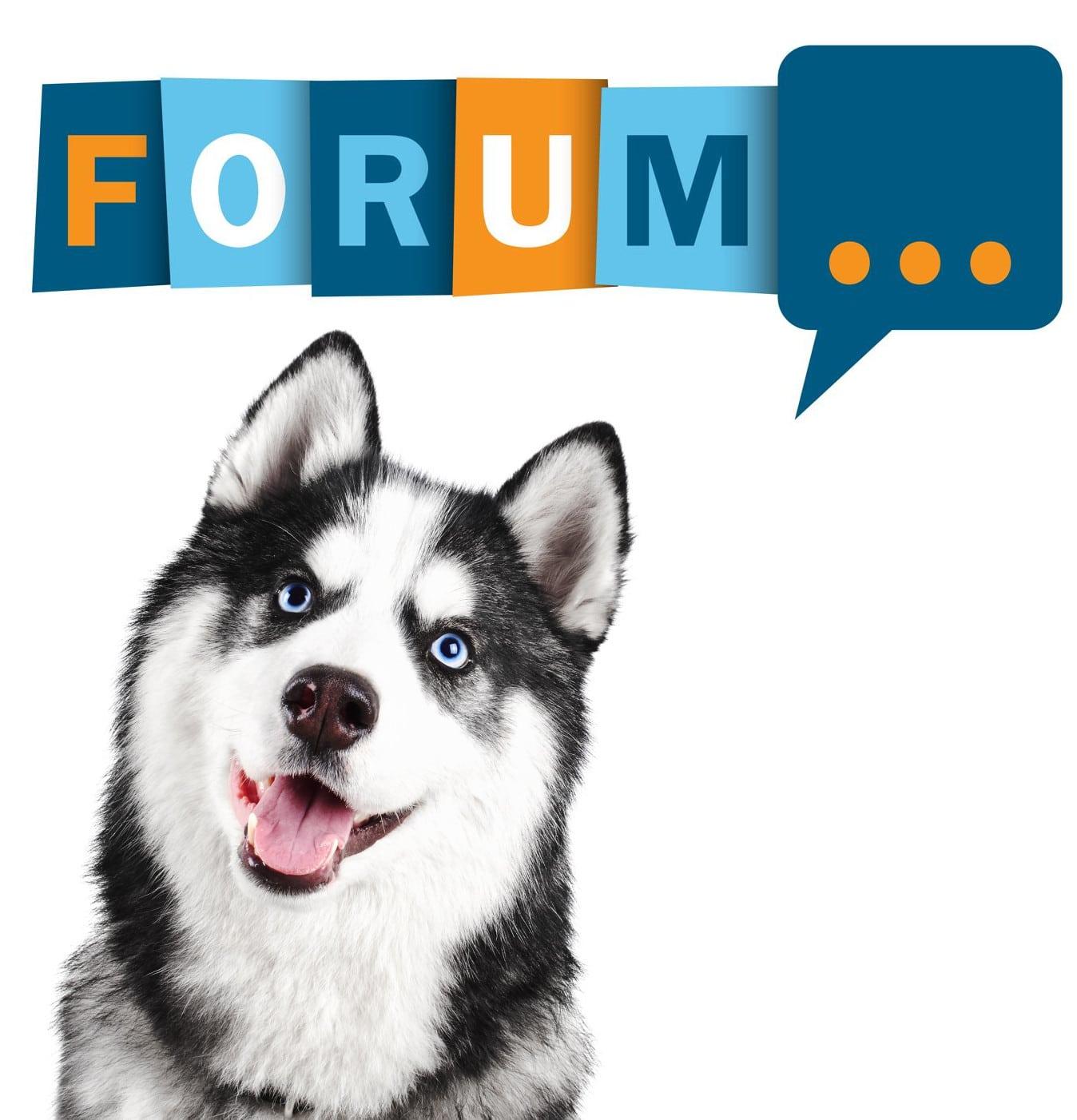 Husky Forum - Fragen und Antworten zum Husky